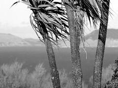 seacliff otago 2002 (travelling-light) Tags: newzealand beach coast seaside otago dunedin