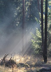 (:Linda:) Tags: mist tree germany woods village thuringia sunbeam conifer nadelbaum brden