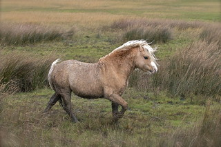 Marsh pony  ( Explored )