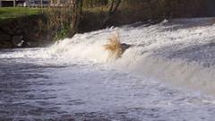 IMG_8846b350D (Wendy:) Tags: heron river 350d january kitlens highwater weir dodder spate