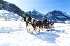 Schwarzsee / Ref.04130 (FRIBOURG REGION) Tags: schnee winter horses lake snow schweiz switzerland see frozen suisse hiver lac neige pferde schwarzsee chevaux lacnoir auftrag lacgel seegfrrni fribourgregion