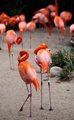 San Diego Zoo #3