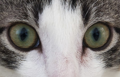 Olhos de gato (felipe sahd) Tags: city cidade cats brasil gatos fortaleza cear felinos