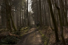 In the woods (bbtarik) Tags: belgium canon450d canon40mm forestdesoigne