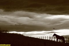 Horse and eagle under a stormy sky - Caballo y águila bajo un cielo de tormenta (minidreamer ♫) Tags: horse mountain storm beauty sepia clouds landscape caballo skies loneliness eagle hill stormy paisaje nubes tormenta soledad cielos montaña nuages stormysky belleza pradera aguila stormyclouds eyeinthesky shelterfromthestorm flylikeaneagle yearofthehorse ridersonthestorm tormentoso horsewithnoname nubesdetormenta ojoenelcielo cielodetormenta escapingfromthestorm canoneos550d escapandodelatormenta añodelcaballo refugiodelatormenta refugiarsedelatormenta