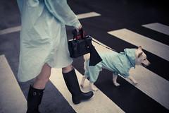 20140501-IMG_9489 (RyanSHU) Tags: dog day rainy shiba raincoat inu