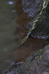 (Rafaelp_) Tags: brazil gua brasil canon minas gerais sigma mg 70300mm alto cachoeira pedras molhado cip pouso t4i