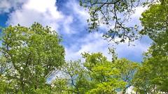 canope parisienne (chogori20) Tags: paris tree nature forest garden jardin arbre pard
