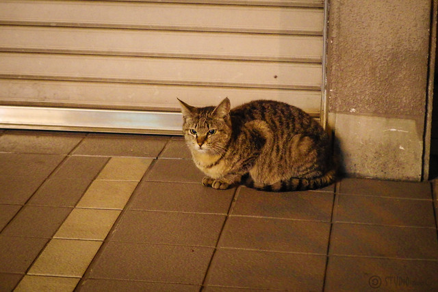 Today's Cat@2014-04-29