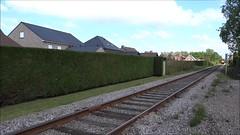 SCM Steamtrain with MBS-steamlocomotive riding in the direction of Maldegem. (Franky De Witte - Ferroequinologist) Tags: de eisenbahn railway estrada chemin fer spoorwegen ferrocarril ferro ferrovia