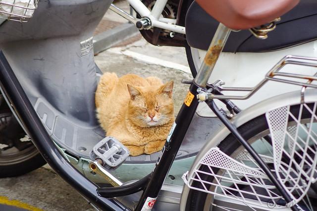 Today's Cat@2014-05-14