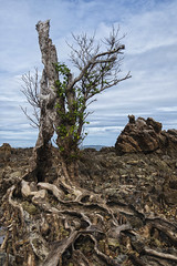 Popototan Island (Michael Laudij) Tags: nikon asia southeastasia philippines palawan d300e michaellaudij