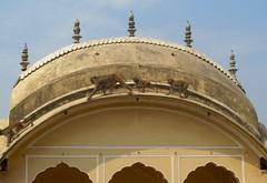 India - Jaipur (Canadian Veggie) Tags: trip travel vacation india backpacking jaipur
