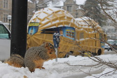 238/365/2429 (February 4, 2015) - Squirrels on a Snowy Winter's Day at the University of Michigan (February 4, 2015) (cseeman) Tags: squirrels annarbor michigan animal campus universityofmichigan umsquirrels2042015 winter eating peanut snow cold plantersnutmobile mrpeanut planters advertising kraft kraftfoods car automobile nutmobile 2015project365coreys yearsevenproject365coreys project365 p365cs022015 februaryumsquirrel gobluesquirrels umsquirrel foxsquirrels easternfoxsquirrels michiganfoxsquirrels universityofmichiganfoxsquirrels