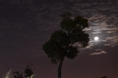 Iluminado por la luna (rosdan2006) Tags: sky moon nikon luna moonrise d3100