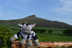 Monkey Up North - Roseberry Topping (monkey_pgtips) Tags: castle abbey monkey yorkshire lincolnshire whitby scarborough lyveden