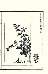 Rose-of-sharon and great tit (Japanese Flower and Bird Art) Tags: flower bird art japan japanese book major tit great picture hibiscus roseofsharon malvaceae tani kano woodblock parus syriacus buncho paridae readercollection genya
