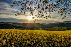 IMG_1916_7_8_fused-2 (Andr Leonhardt) Tags: trees sunset nature beauty clouds landscape deutschland abend heaven sonnenuntergang natur himmel wolken landschaft bume raps hdr erzgebirge