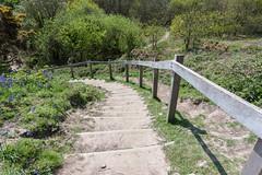 Warren Glen, Hastings Country Park (ghostwheel_in_shadow) Tags: england sussex europe stair unitedkingdom steps hastings eastsussex architecturalfeatures hastingscountrypark warrenglen englandandwales architectureandstructures