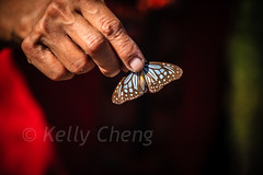 Taiwan-121113-244 (Kelly Cheng) Tags: travel color colour green tourism nature animals horizontal fauna butterfly daylight colorful asia day taiwan vivid colourful traveldestinations  northeastasia