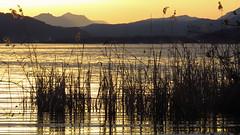 Golden Lake (liqube) Tags: sun lake mountains water sunshine reeds golden evening outdoor mountainrange