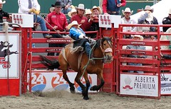 The Cowboy shows Y'all how its done! (auntiekelliephotography) Tags: horse canada bareback spur book jump cowboy bc ride kick text alberta rodeo pepsi cloverdale bronc sponsor buckskin bucking 2016 ponoka