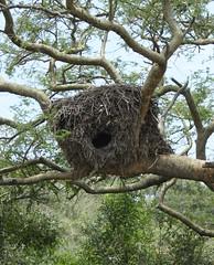 Box Nest (My photos live here) Tags: africa park canon eos elizabeth nest box wildlife queen safari national uganda 1000d