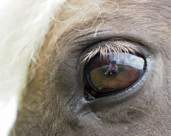 bright eyes (rippchenmitkraut66) Tags: new light shadow horse sun colour macro reflection germany deutschland europe mini olympus elements 60mm makro today zuiko omd