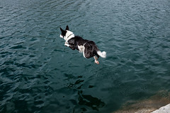 Learning to Fly (alvey_ski) Tags: dog lake reflection drops jump jumping fujifilm longlake waterdog explorecalifornia x100t fujix100t