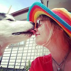 Buddy kisses (ameliabeare) Tags: puppy malamute alaskanmalamute