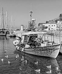 Myrina Harbour Lemnos ( seagulls wait for bits of fish from the fishermen) (BW) Olympus OMD EM5II & mZuiko 25mm Prime (markdbaynham) Tags: island greek north aegean hellas evil olympus greece grecia gr zuiko omd csc oly mz limnos hellenic m43 zd mft lemnos myrina mirrorless micro43 mzuiko m43rd em5ii zuikolic