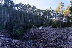20160627-11-Disappearing Tarn (Roger T Wong) Tags: water outdoors rocks walk australia hike scree tasmania hobart mtwellington bushwalk tramp 2016 wellingtonpark dolerite disappearingtarn sony2470 rogertwong sel2470z sonyfe2470mmf4zaosscarlzeissvariotessart sonya7ii sonyilce7m2 sonyalpha7ii