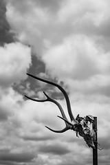 warning (KClarkPhotography) Tags: sky white black west skull big texas dramatic totem deer antlers western primal kclarkwest