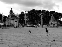 L'enfant de Paris (Allison4692) Tags: blackandwhite paris france childhood child pigeons statues concorde enfant enfance parisianbirds