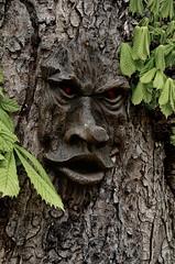 SPIRIT OF THE GENERAL ELLIOT (Simon R Brook) Tags: tree face leaves nikon general elliot middlesex greenman uxbridge hillingdon d7000 simonrbrook