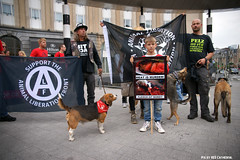 Animal Liberation Front (Red Cathedral uses albums) Tags: brussels dog vegan sony streetphotography animalrights bruxelles alf vegetarian vegetarians alpha gaia brussel veganism carnivore animaltesting herbivore meatismurder | redcathedral omnivore animalliberationfront a850 eventcoverage sonyalpha meatconsumption biteback aztektv veganisme marchepourlafermeturedesabattoirs marsvoordesluitingvanslachthuizen
