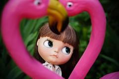 I love Flamingos...
