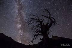 El rbol estelar ( Pere Soler) Tags: nightscape nightshot starrynight milkyway vialactea vialctia paisajeastronmico