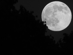 Full moon b/w (jessicacandacephotos) Tags: light shadow moon nature beautiful night dark bright michigan space crescent full fullmoon craters crater planets astronomy
