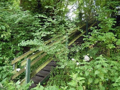 Steps in woodland, 2016 Jun 16 -- photo 2
