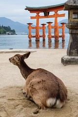 Itsukushima XI (Douguerreotype) Tags: red japan temple gate shrine buddhist hiroshima deer miyajima lantern torii vermilion