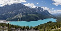 Peyto Lake LR (Jack Nevitt) Tags: lake canada photographer banff peyto