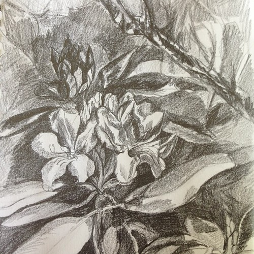 "#garden #sketch #rhododendron • <a style=""font-size:0.8em;"" href=""https://www.flickr.com/photos/61640076@N04/8715369104/"" target=""_blank"">View on Flickr</a>"