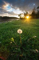 Welcome Back (talkingtojoey) Tags: sunset river dandelion seeds pa falmouth susquehanna susquehannariver elizabethtown sigma1020mm sigma1022mm pentaxk5iis