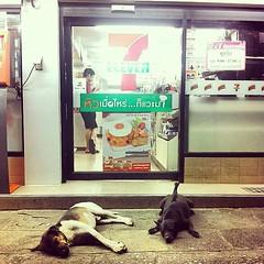นอนเป็นคู่ สมาชิกคู่ล่าสุดในโปรเจ็คท์ #dogfrontseveneleven