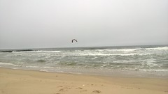 atlantic ocean in NJ, USA (freedom333) Tags: ocean usa bird beach water outdoors coast spring sand waves seagull relaxing nj calming shore belmar 2013