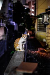 _DSC5851 (Stagnant Life & Bearangel) Tags: road pets car horizontal cat outdoors photography kitten day sitting taiwan kitty nopeople taipei domesticcat lookingaway gingercat selectivefocus oneanimal colorimage animalthemes