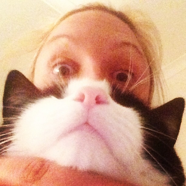 Cat beard success !!!