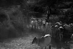 the rural side (Dr Puneet Aggarwal) Tags: gettyimages monochromes