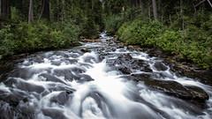 Stream Feeding Narada Falls (rich_rogero) Tags: longexposure nature waterfall washington stream unitedstates seattletrip packwood mtraniernationalpark naradafalls